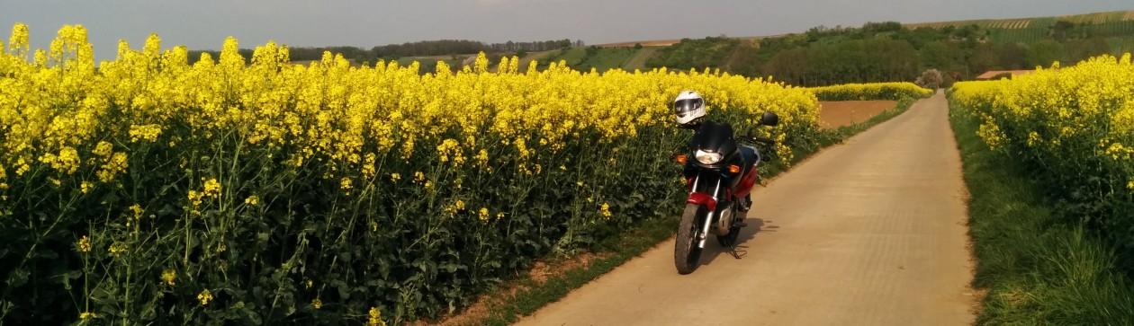 Rapsfelder – kleine Motorradausfahrt
